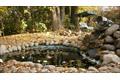 Пруд с водопадом. На заднем плане качели навес под вековыми лиственницей и сосной на полянке растут грибы - козлята. За сезон в лучшие годы собирали до 20 литров грибов.